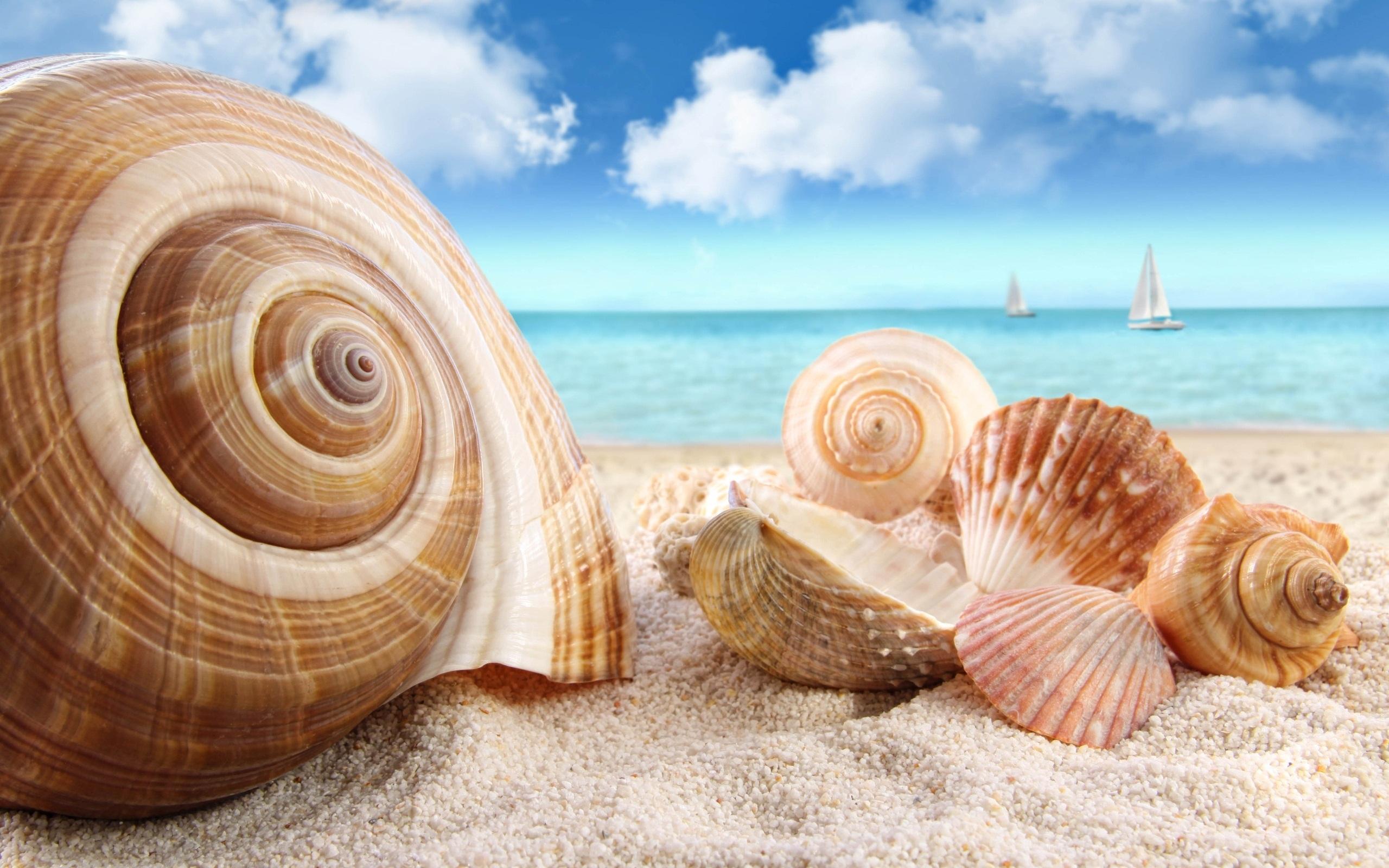 морские раковины, скачать фото, пляж, ракушки, песок, sand beach wallpaper
