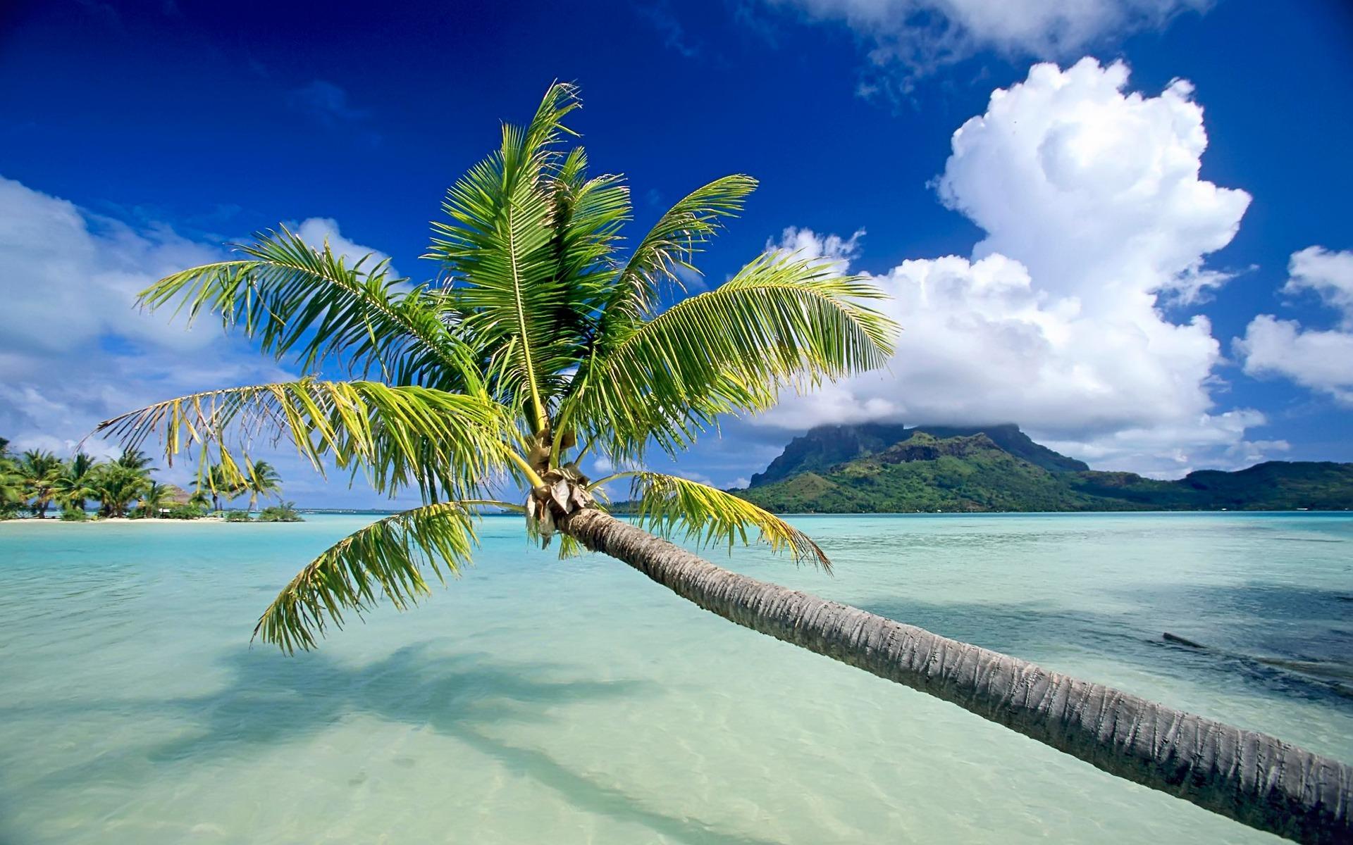 море, небо, пляж, пальмы, скачать фото, обои для рабочего стола, beach wallpaper