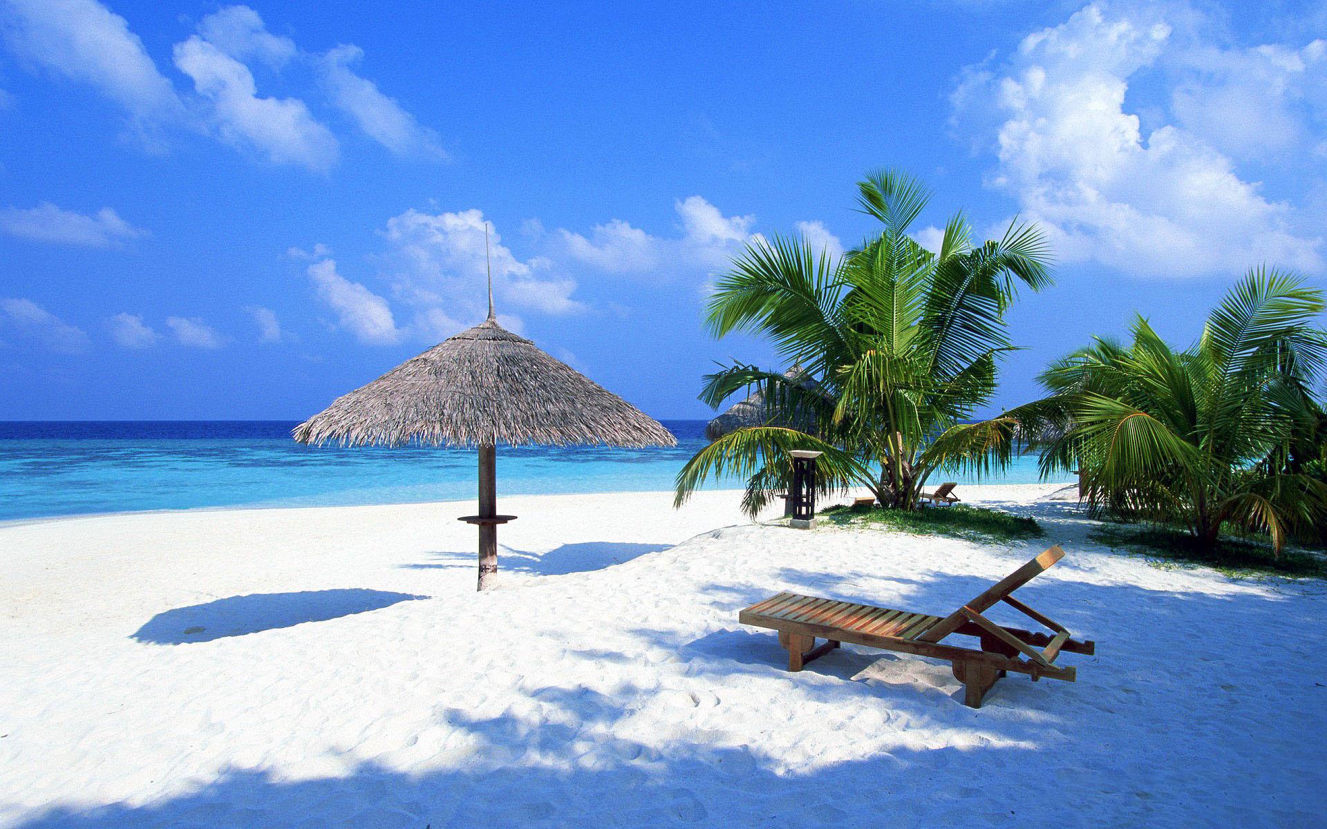 beach sand wallpaper, palm trees, скачать фото, обои для рабочего стола, грибок