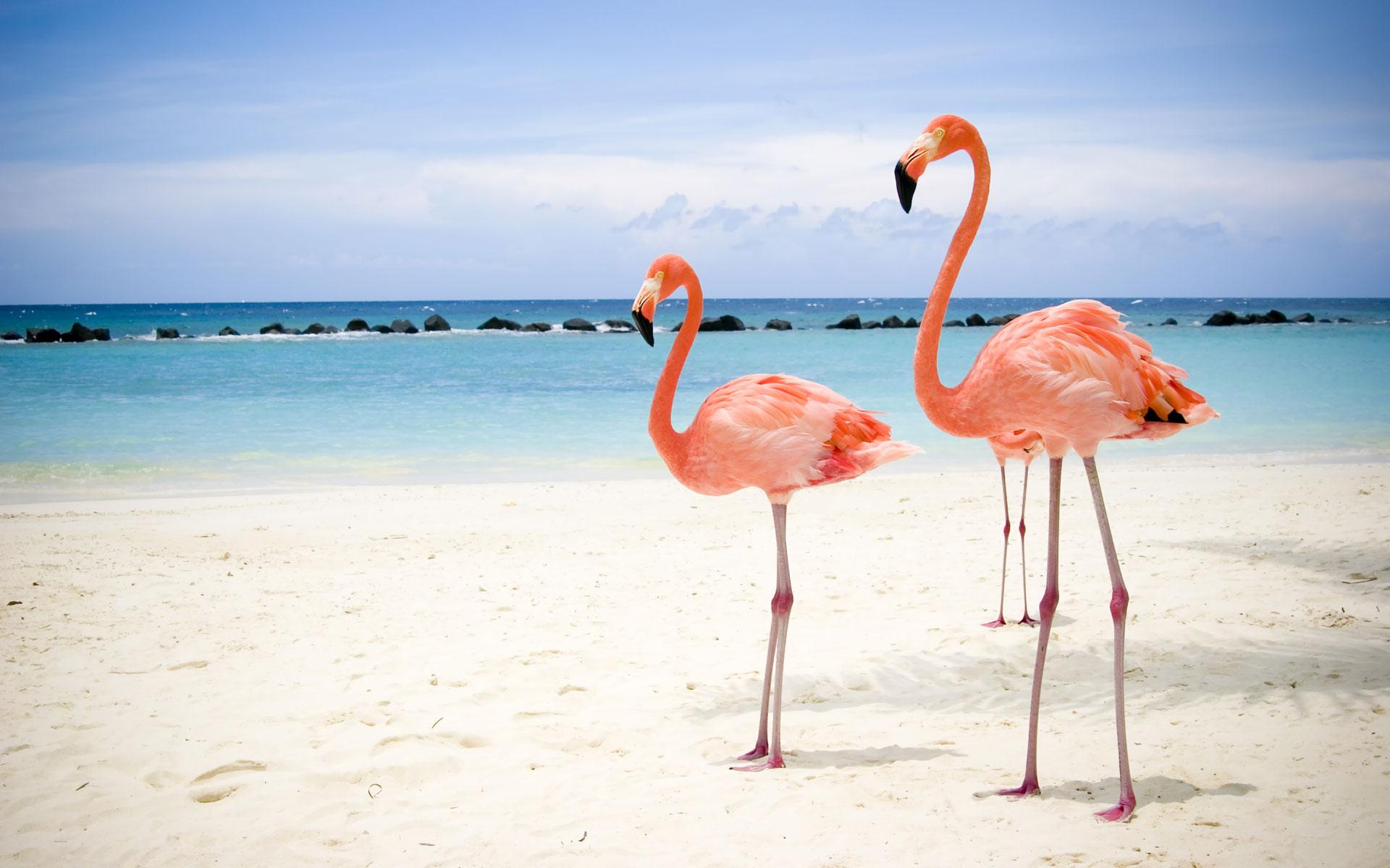 птицы фламинго на берегу моря, пляж, песок, скачать фото, обои для рабочего стола, flamingo beach wallpaper