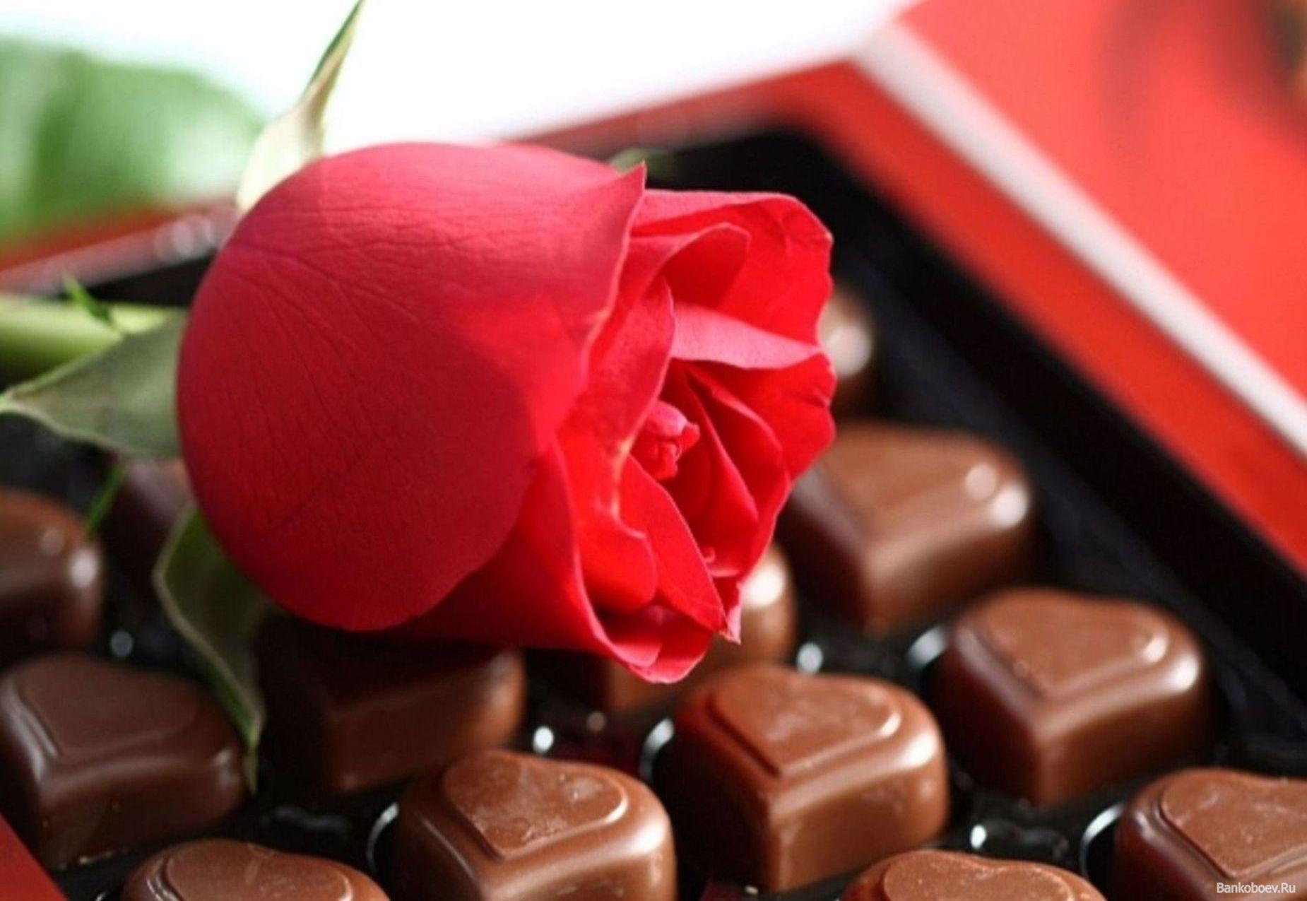 шоколадные конфеты и красные розы, скачать фото, обои на рабочий стол