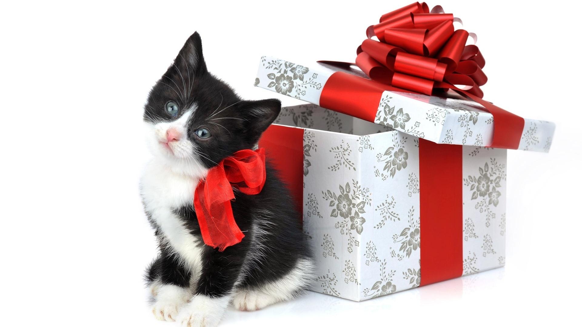 кот, котенок, Рождественские обои для рабочего стола, merry christmas wallaper, X-mas wallapper, скачать фото, Рождество
