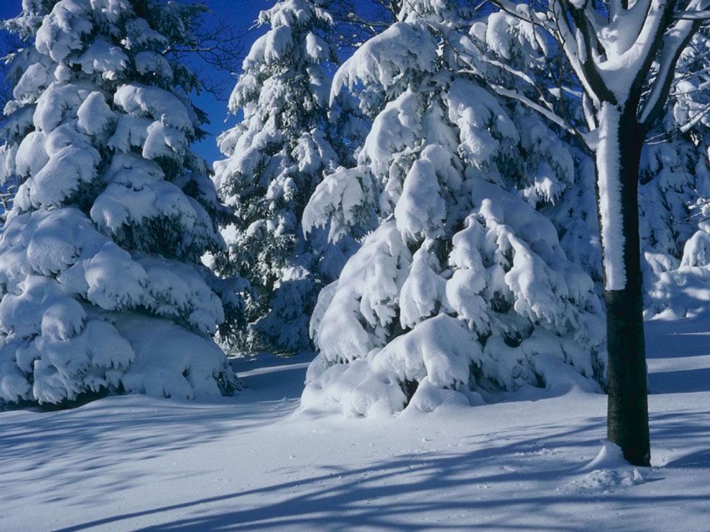 Зимний лес, обои, деревья, фото, зима, скачать