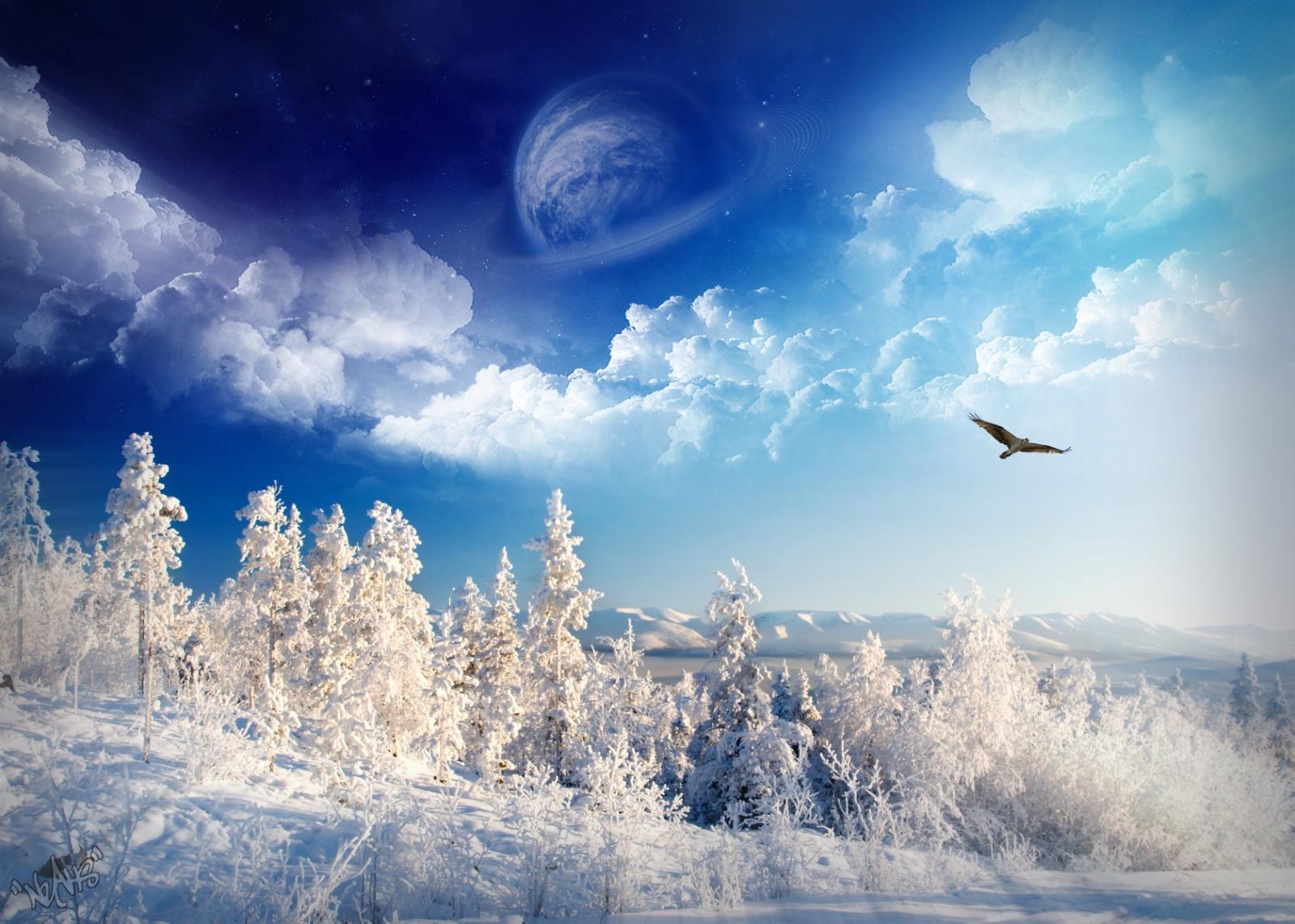 небо, деревья, снег, фото, обои, зима