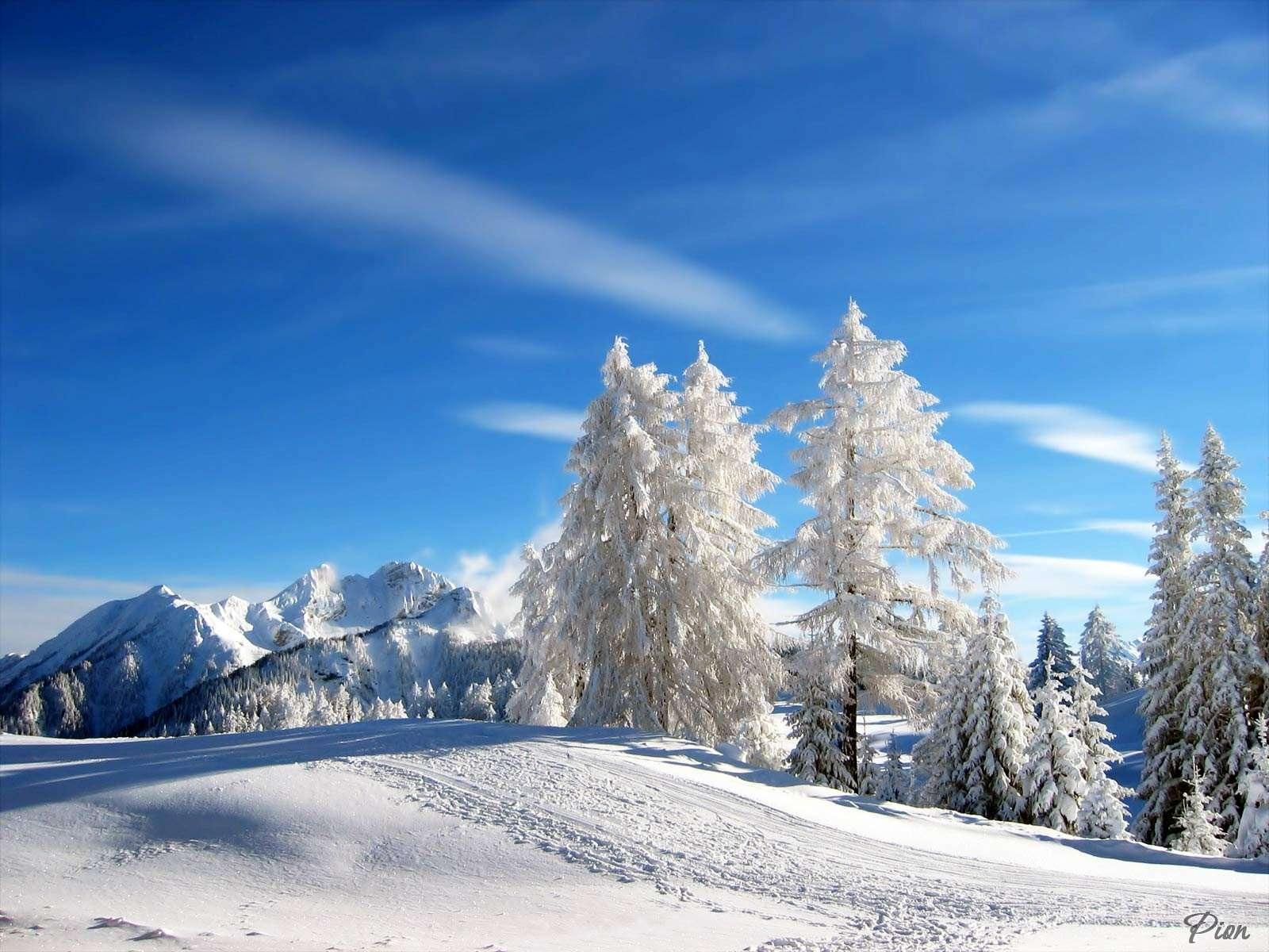 Снег, деревья, зима, скачать фото, обои