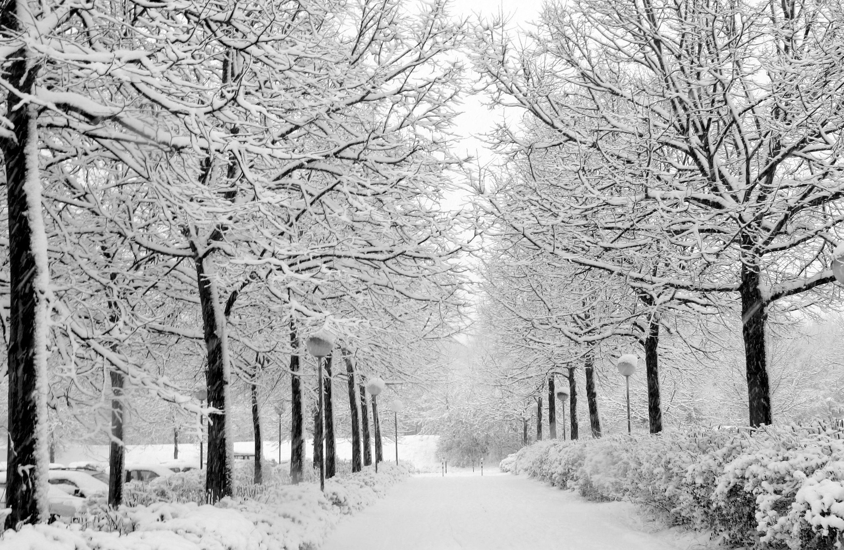 Снег, аллея. фото, обои для рабочего стола, скачать