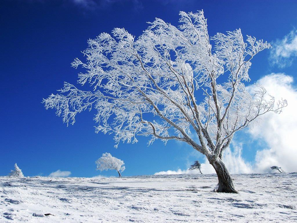 Снег, зима, дерево, скачать обои на рабочий стол