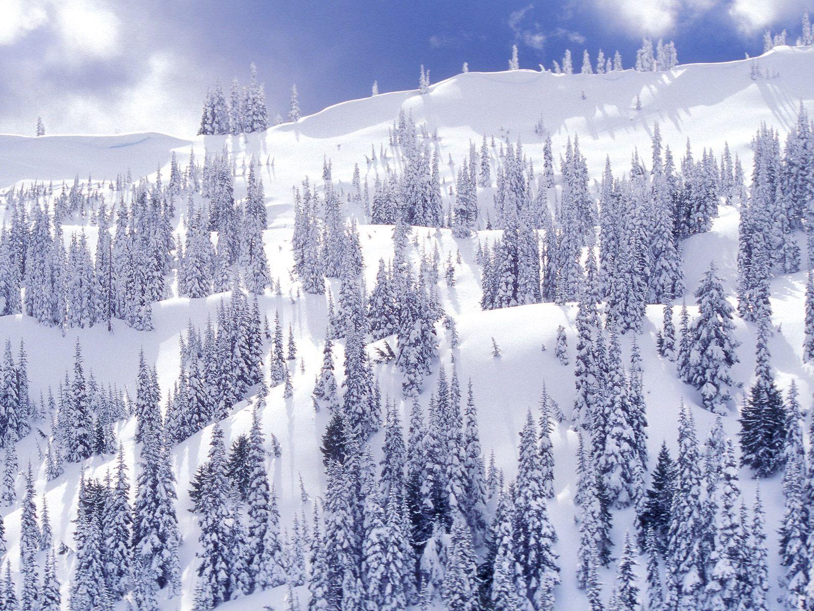 зима, лес, деревья