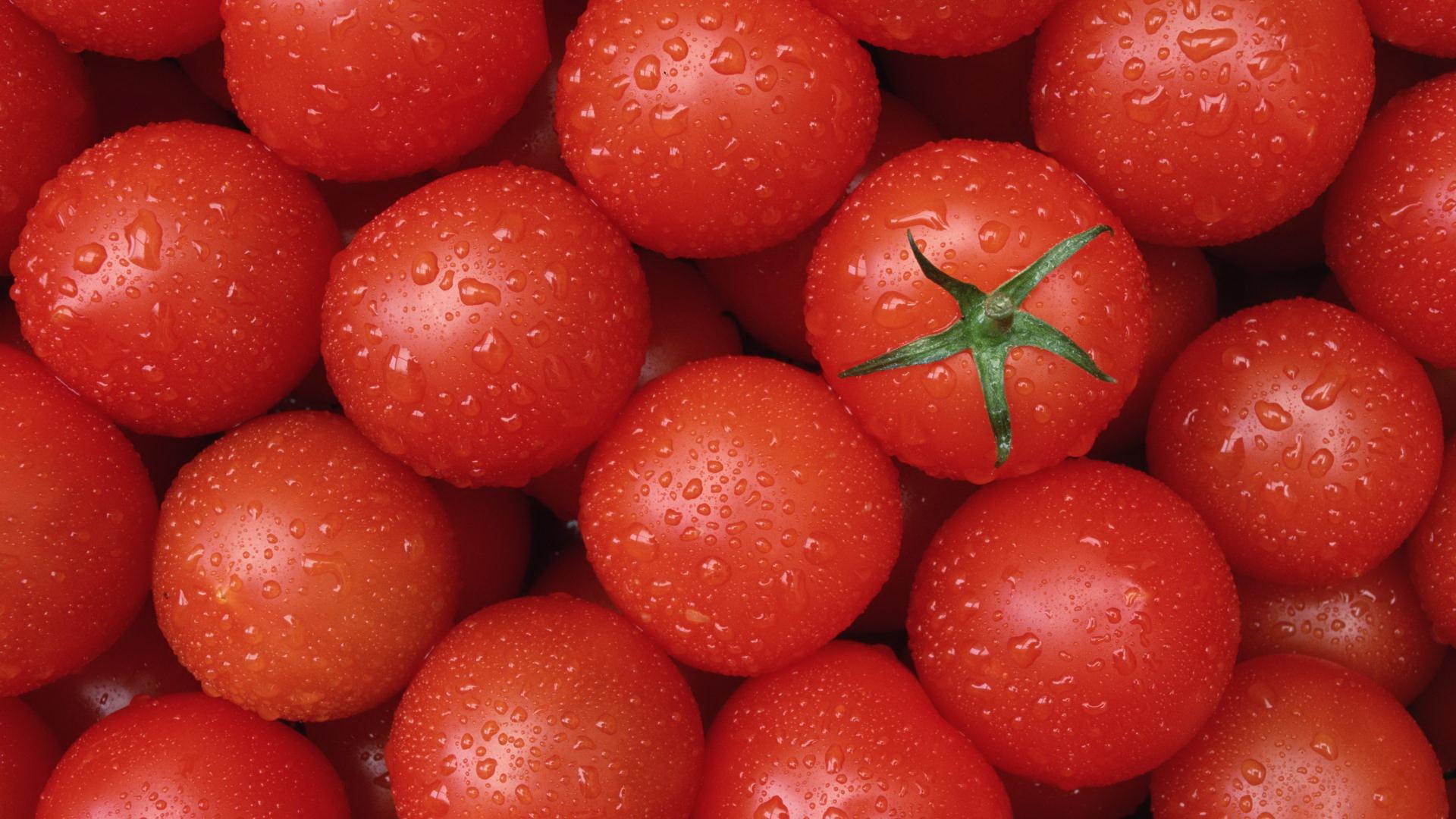 помидоры, фото, обои, для рабочего стола