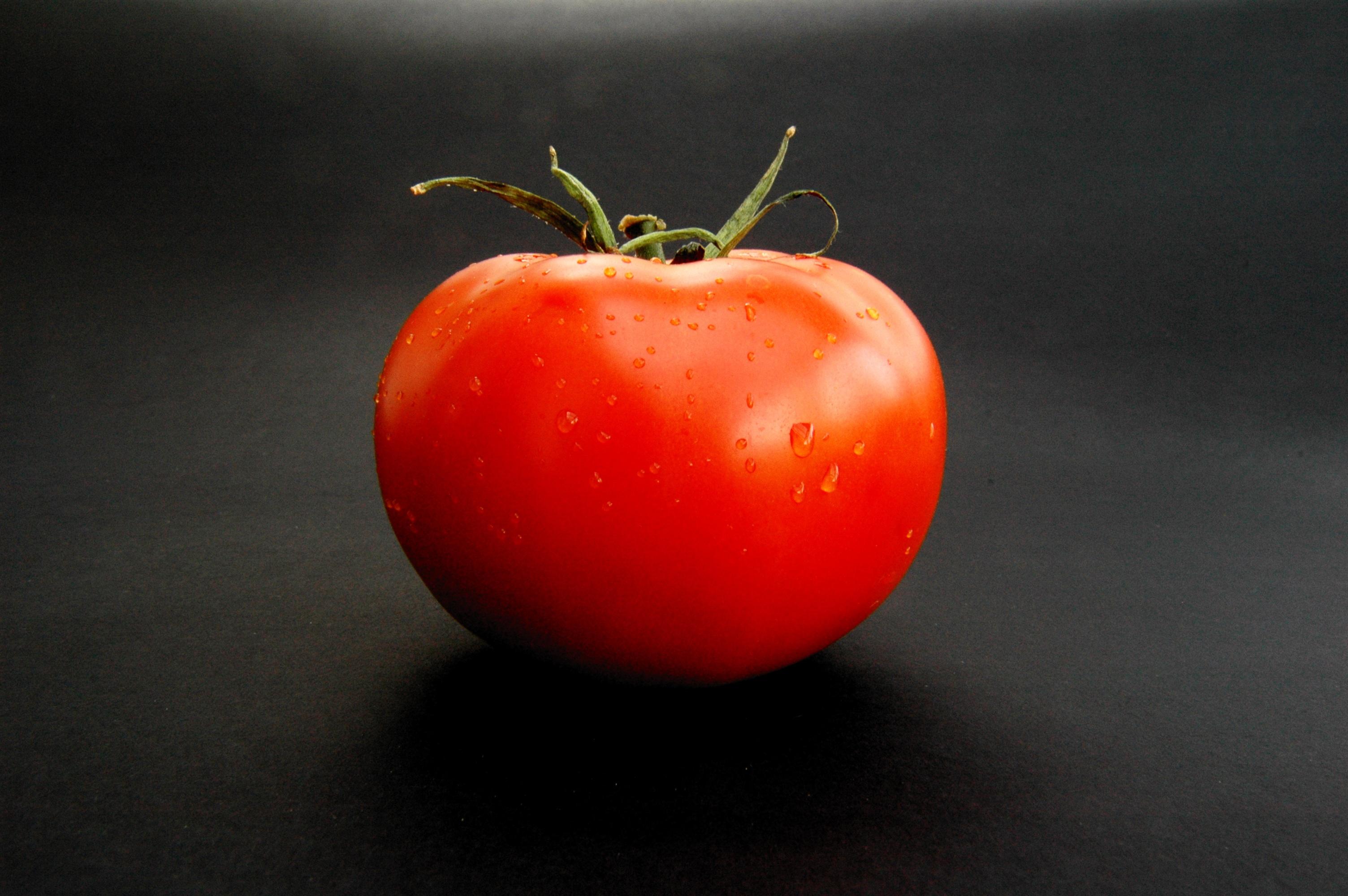 Помидор, фото, обои для рабочего стола, томат