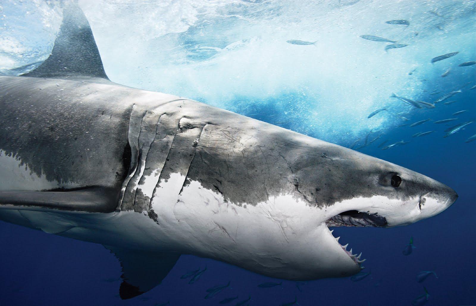 путешествия дальние смотреть фотографии акул яркими