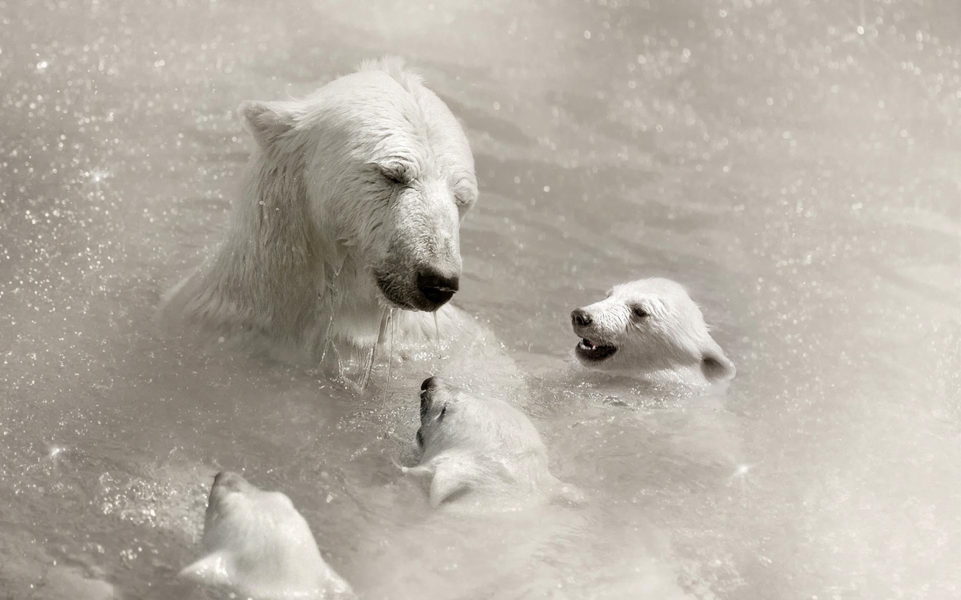 белая медведица с медвежатами, скачать фото, обои для рабочего стола