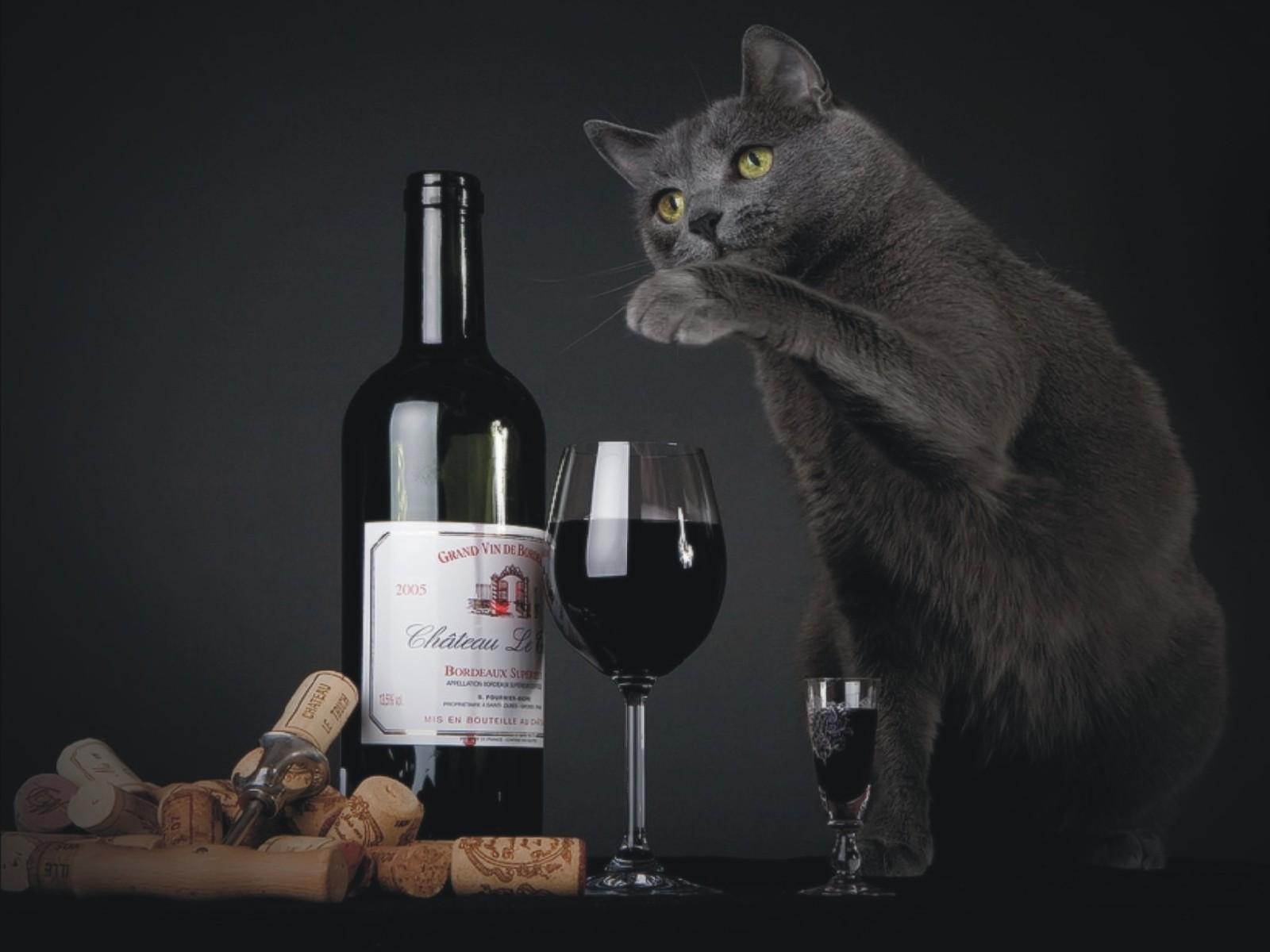 бутылка красного вина, фужер и серый кот, обои для рабочего стола
