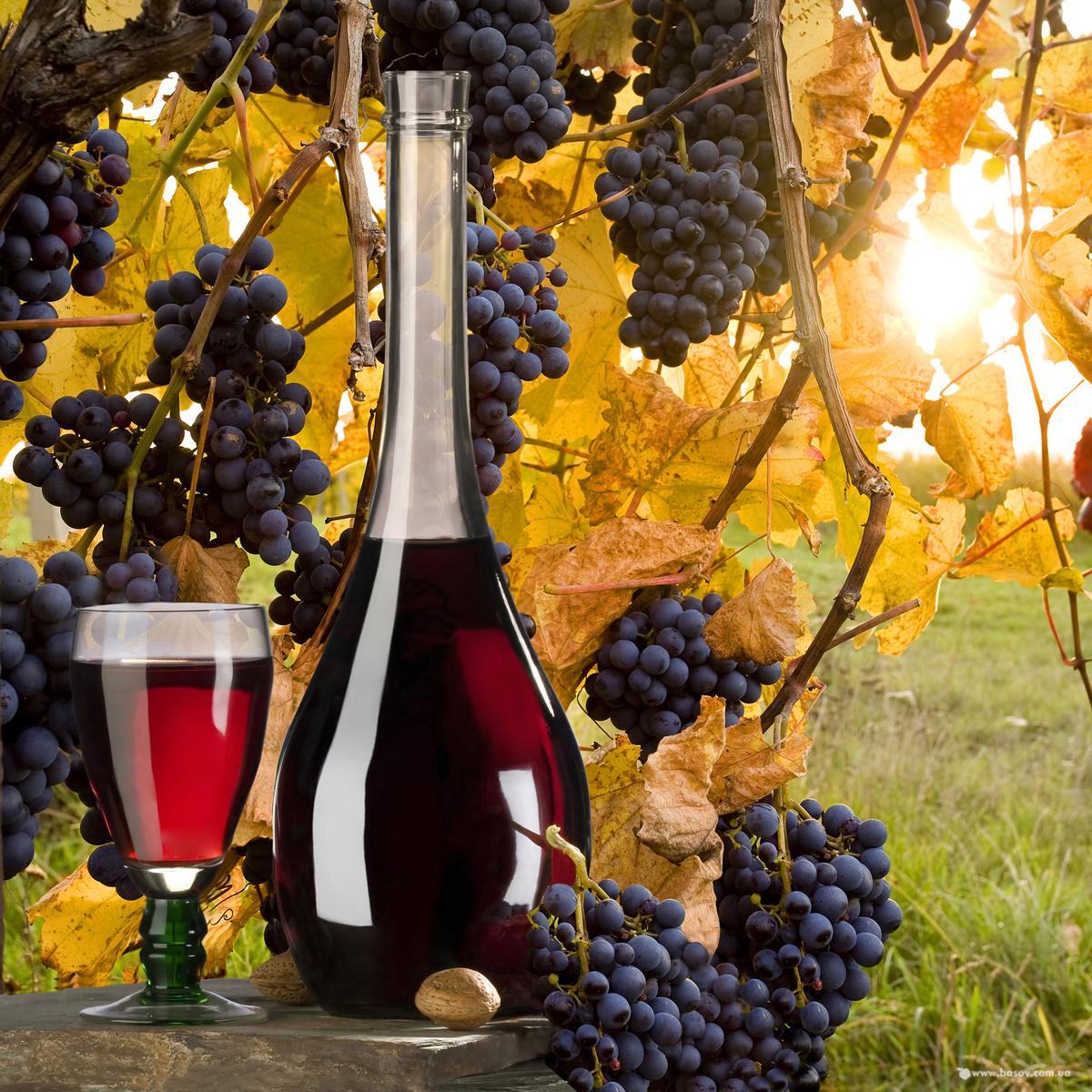 виноград для вина, красное вино, скачать фото, обои для рабочего стола