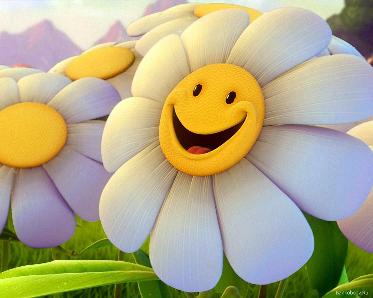 том, смешные цветочки рисунок этом снимке
