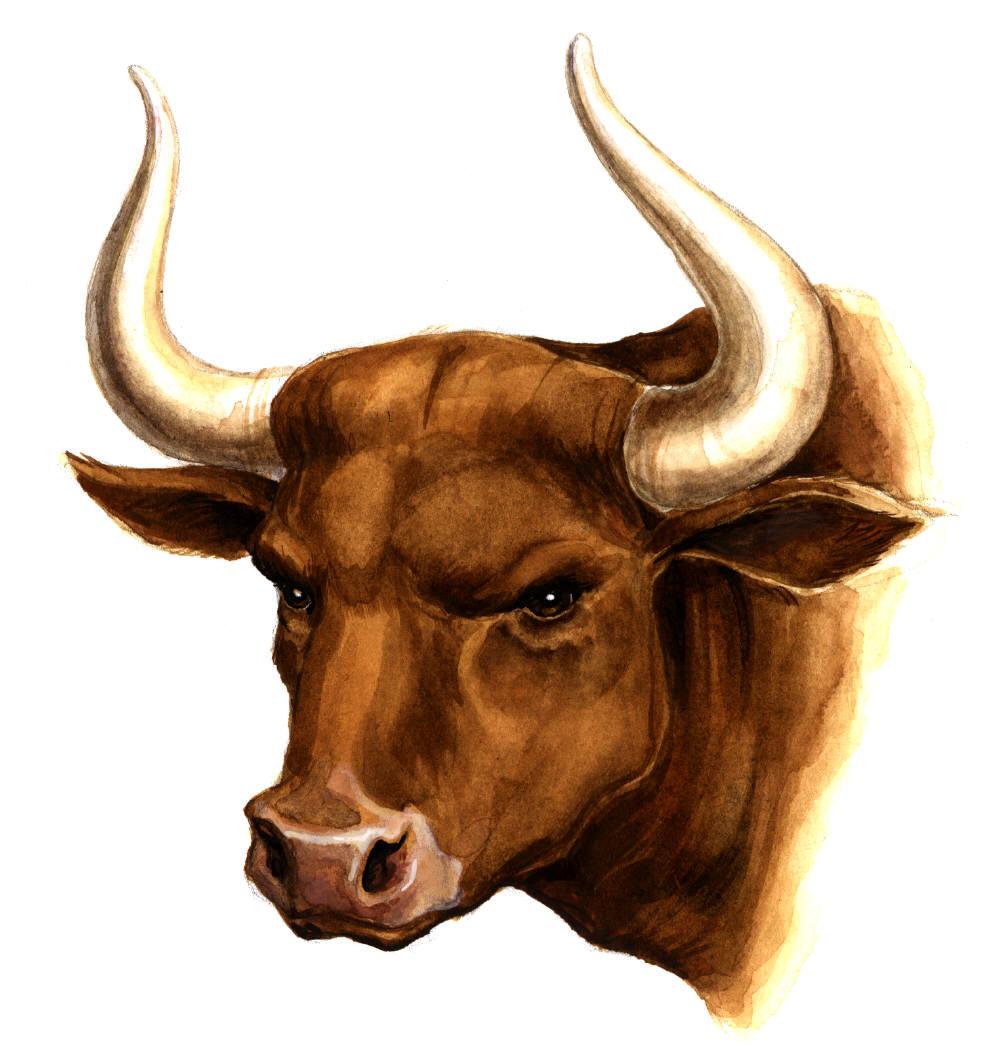 клипарт, рисунок, голова быка с рогами, скачать фото, обои на рабочий стол