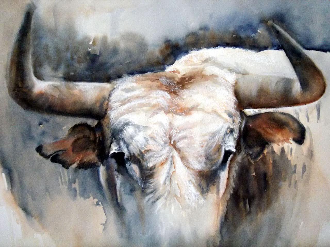 старый белый бык, рога, скачать рисунок, фото