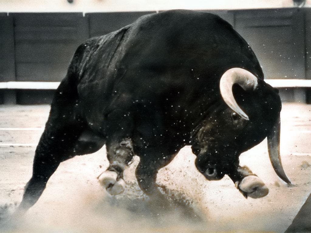 большой черный бык атакует, скачать фото, обои на рабочий стол