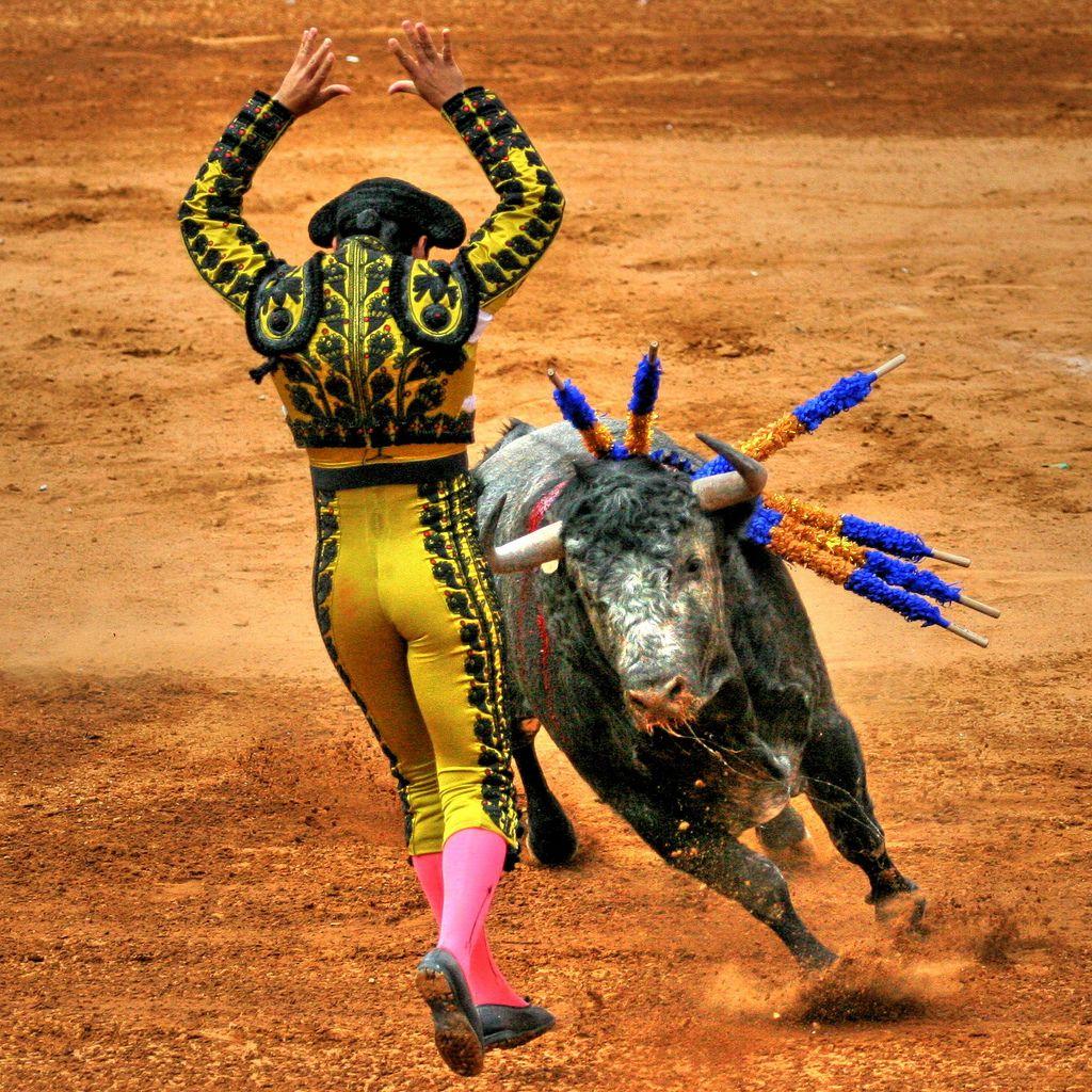 матадор и бык, скачать фото, обои на рабочий стол, бои быков, коррида